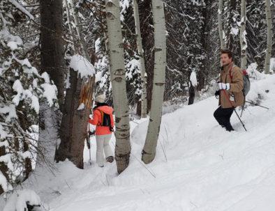 Snowshoeing tour through aspen trees