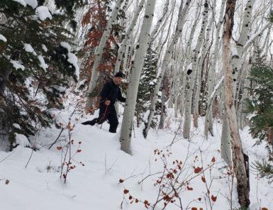 Snowshoeing through aspen trees